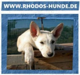 Rhodos Hunde